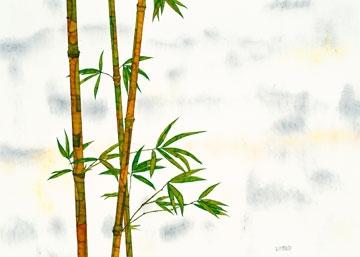 Ferner Michael – Bambus