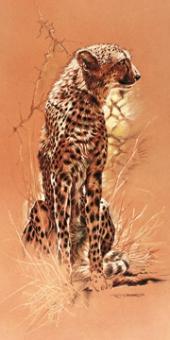 Casaro Renato - Cheetah